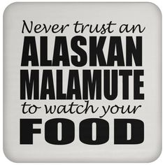 Never Trust An Alaskan Malamuter To Watch Your Food Coasters