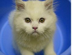 La salud de tu gato | Cuidar de tu mascota es facilisimo.com