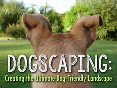 While dogs and backyards go hand-in-hand (or is it paw-in-paw?), having a fun-loving dog and a perfectly manicured lawn or garden is just a dream for many dog moms and dads. Let's face it - dogs dig; Dog Friendly Backyard, Dog Backyard, Backyard Landscaping, Backyard Ideas, Landscaping Ideas, Patio Ideas, Garden Ideas, Garden Fun, Garden Inspiration