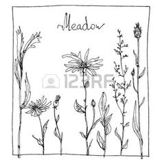 floral composition with ink drawing herbs and flowers in the square, doodle wild plants, monochrome black line drawing floral card, hand drawn vector illustration photo