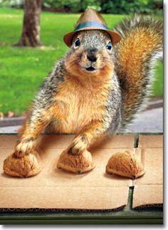 Squirrel Plays Shell Game Funny Birthday Card - Greeting Card by Avanti Press #AvantiPress #Birthday