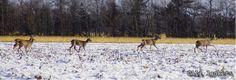 Januari 2017 Deers.