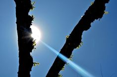 Sun Beam Photo by Jack Borno -- National Geographic Your Shot
