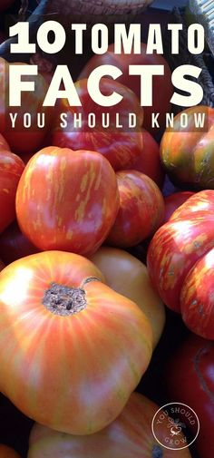 Have a more successful garden & harvest by understanding these facts about growing tomatoes.