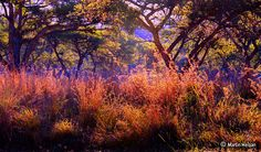 The Colours of the Bushveld, Nelspruit, Mpumalanga World Pictures, Pictures Images, Trip Planning, Planning Board, In And Out Movie, Nature View, Out Of Africa, Beautiful Places In The World, Trees To Plant