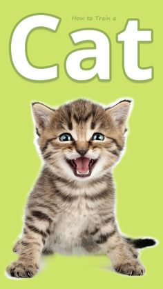 How to Train a Cat - Yes! You can train a cat to come on command, use a toilet, and more—and it's all much easier than you thought...