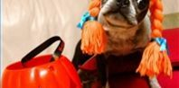 80's glam:  Homemade Costumes for Dogs | eHow.com