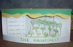 Make A Rainforest Diorama. Printable layers of rain forest