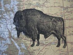 Buffalo or Bison Art Print On Vintage Atlas Map of Colorado
