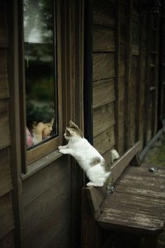 Hi little girl, could you open the window Meow