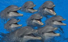 Swim with dolphins in #Cancun.