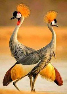 (2) Media Tweets by KHALID KHAN (@ARS68911113) / Twitter Rare Birds, Exotic Birds, Colorful Birds, Beautiful Creatures, Animals Beautiful, Cute Animals, Most Beautiful Birds, Pretty Birds, Beautiful Things