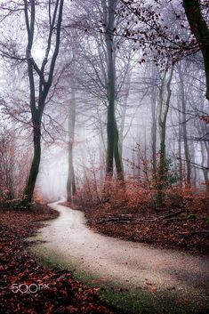 Walking in the mist (Netherlands) by Ton lع Jeune on 500px cr.