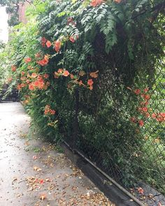 The Upper West Side of NYC has a number of community gardens which are the perfect outdoor hiding places. These gems add life to the bustling UWS! Nyc Bucket List, Riverside Park, Upper West Side, Hiding Places, Central Park, Sidewalk, Community, My Love, Secret Gardens