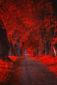 ¨...En al mitad del camino que une la vigilia con un sueño... Somos el ritmo de lo otro, la sombra de la especie que se levanta pese a todo en el vértice del tiempo. Ser más que el esbozo de nuestro propósito de ser en algo... Atados en la sinergia de la vida ejercemos nuestro derecho a transgredirla, a robarle momentos de felicidad, a dibujar alguna curva... ¨A§