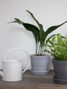 The Revival of House Plants. Faux Flower Arrangements, Outdoor Candles, Hanging Pots, Frosted Candle Holders, Little Gardens, Umbrella Tree, Rubber Tree, House Plants, Plant Wall