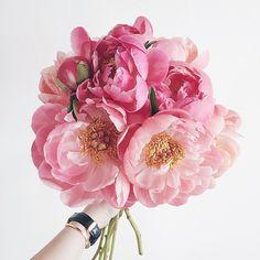 Gorgeous pink peonie