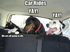 Car Rides!  Check out more funny pics at killthehydra.com