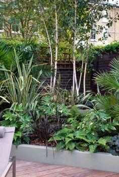 Mylandscapes Garden Design Must have a few single stemmed Silver Birch - himalayan variety - in our courtyard Ferns Garden, Garden Shrubs, Diy Garden, Garden Trees, Shade Garden, Garden Landscaping, Bush Garden, Garden Cottage, Garden Path