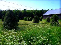 vanhan ajan heinäkuu Vintage Country, Nature Photos, Outdoor Activities, Farm Animals, Wonderful Time, Summer Vibes, Countryside, Fields, Summertime