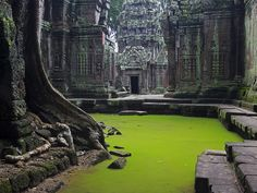 Ta Prohm temple, Cambodia. It was founded by the Khmer King Jayavarman VII in the late 12th/early 13th centuries as a Mahayana Buddhist monastery and university. Now surrounded by thick jungle the ruins were added to the UNESCO World Heritage List in 1992. Photo by Peter Nijenhuis