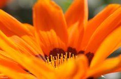 flores naranjas significado