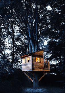 Out on a limb with a mouth full of nails, one dad suspends a shack 7 feet above his backyard. Here's how you can make a world-class backyard tree house.