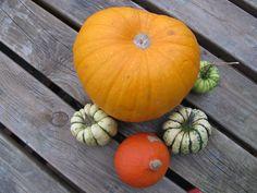 Cassie Liversidge- Pumpkins and squash