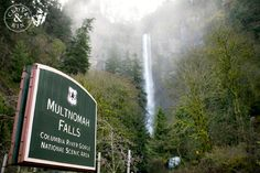 Multnomah Falls is incredible!  Mt Hood National Forest Oregon