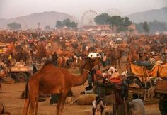 The Pushkar Camel Fair - http://colouricious.com/textile-holidays/the-pushkar-camel-fair/
