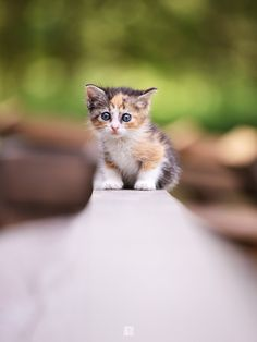 Cat kitten adorable gorgeous love