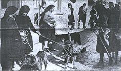 Melgaço, entre o Minho e a Serra: O Concurso Tradicional do Cão de Castro Laboreiro ...