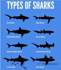 Types of sharks..my favorite is Great White