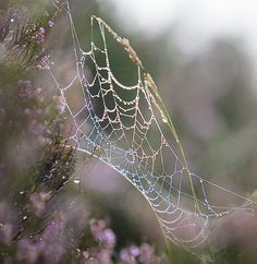 dew on a web. rannoch moor 12 September 09