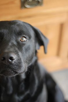 black dogs are beautiful