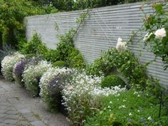 Pretty fence with espalier and lavender
