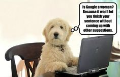 Doggone if I Know