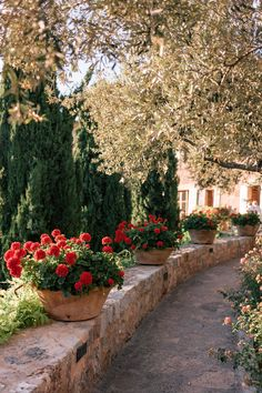 Babymoon in Mallorca, Part 2 - Gal Meets Glam Chillout Zone, Landscape Design, Garden Design, Adventure Is Out There, Dream Garden, Geraniums, Oh The Places You'll Go, Garden Paths, Belle Photo