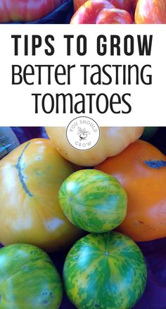 Follow these tips for better tasting tomatoes from your garden. Homegrown tomatoes need to be properly cared for to get the best flavor.