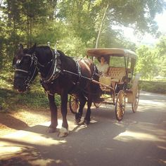 Blackberry Farm: Carriage Rides
