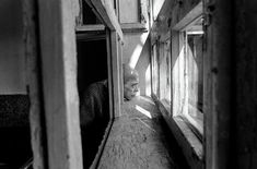 They were made by George Georgiou who worked in Kosovo and Serbia between 1999 and Scary photos. They were made by George Georgiou who worked in Kosovo and Serbia betwee Mental Health Policy, Mental Health Problems, Lee Friedlander, Mental Asylum, Insane Asylum, Robert Frank, Eugene Richards, Karl Blossfeldt, Psychiatric Hospital