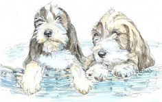 PETIT BASSET GRIFFON Vendeen 11x14 Original Watercolor on Ink Print Matted Ready to Frame ~ADORABLE~
