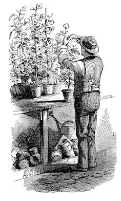 Old Picture - Gardner with Flowers - The Graphics Fairy