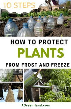How To Protect Plants From Frost When It Comes