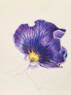 Pansy petal as part of Kate Clarke's Still Life textures course coming soon to ArtTutor