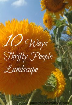 10 Ways Thrifty People Landscape
