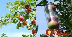 Vyrobte si šikovný zberač ovocia z plastovej fľaše. Zaberie vám to len pár…