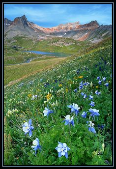 ✯ San Juan Mountains - Columbine, Colorado