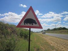 Hippo crossing :)