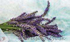 Multifunkčná levanduľová voda: Pre tieto účinky na pleť i vlasy si ju zamiluješ! Plants, Plant, Planets